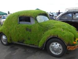 vwbeetlegrass1